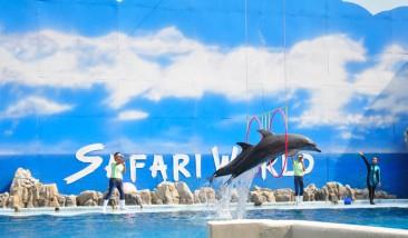 safari-world