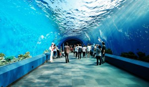 siam-ocean-world