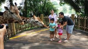 singapore-zoo-singapore_2