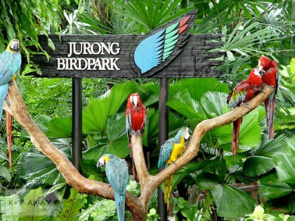jurong-birdpark_2
