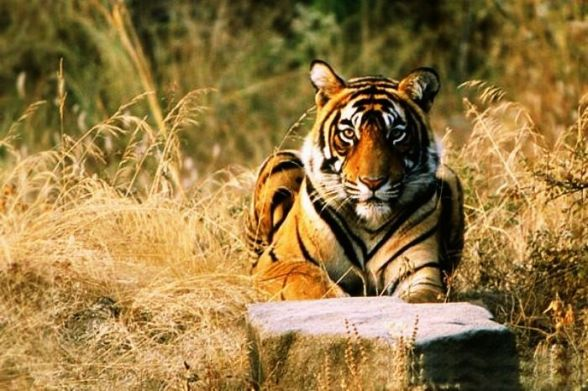 Ranthambore-National-Park-Rajasthan