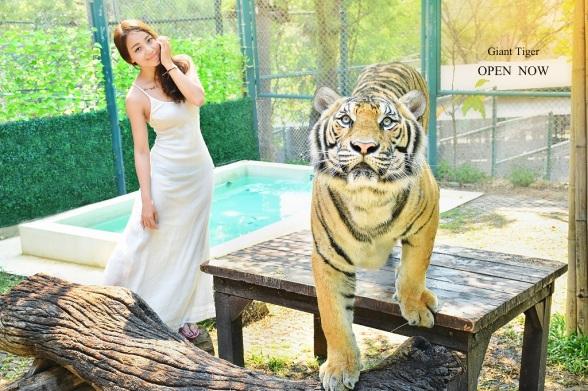 tigerkingdom-chiangmai-giant