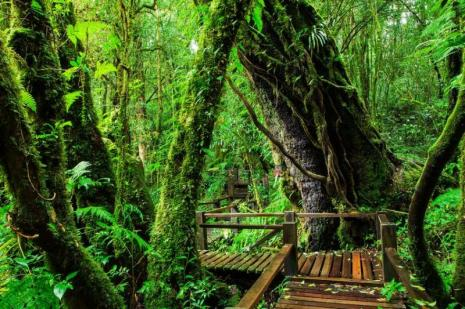 ang-ka-nature-trail-in-doi-inthanon-national-park-800x600