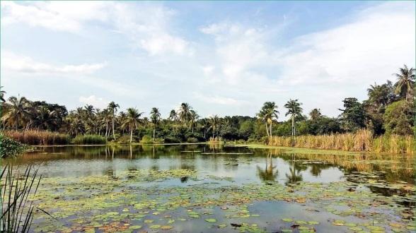 Pulau Ubin island