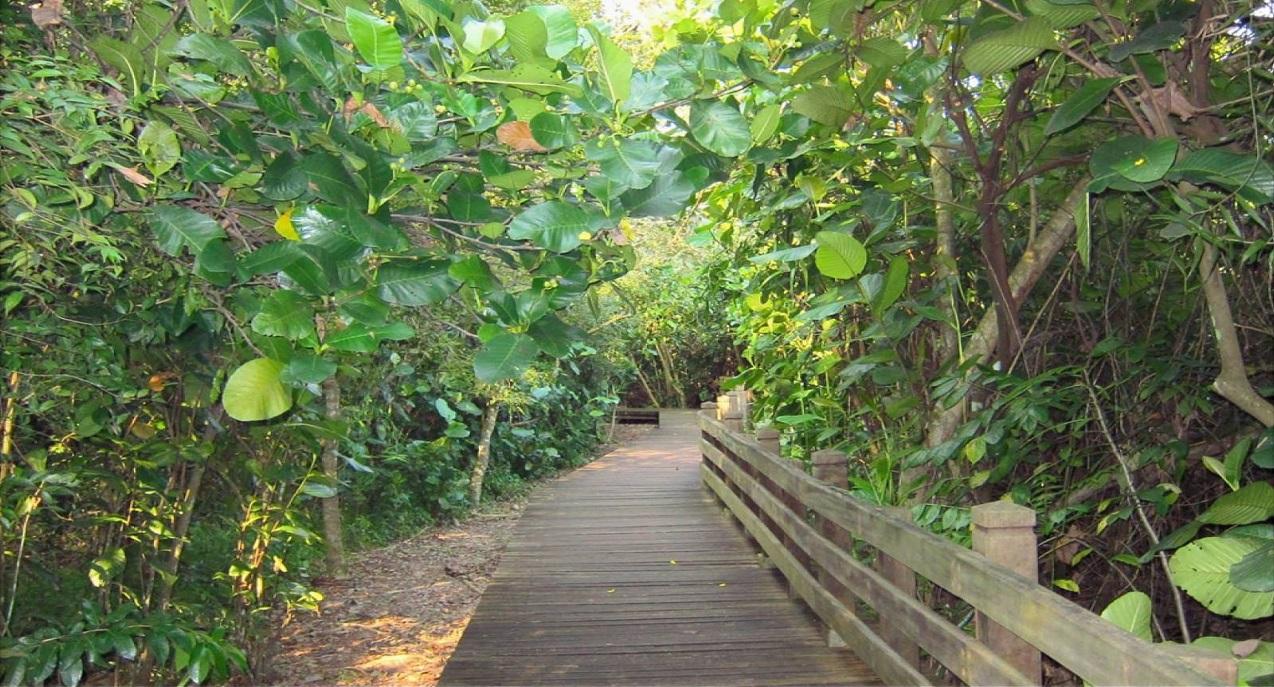 Sungei Buloh Nature Park