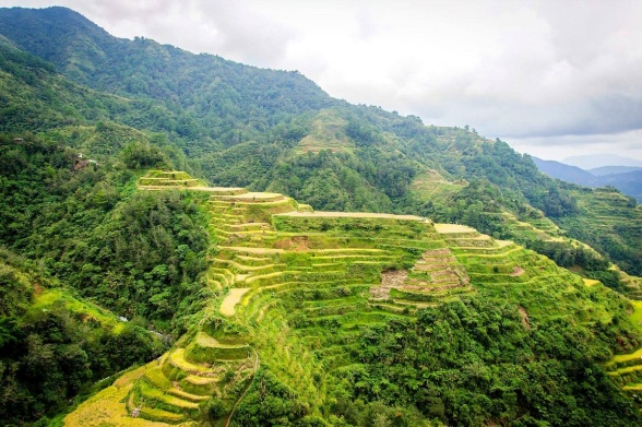 Rice_Terrace_Philippines