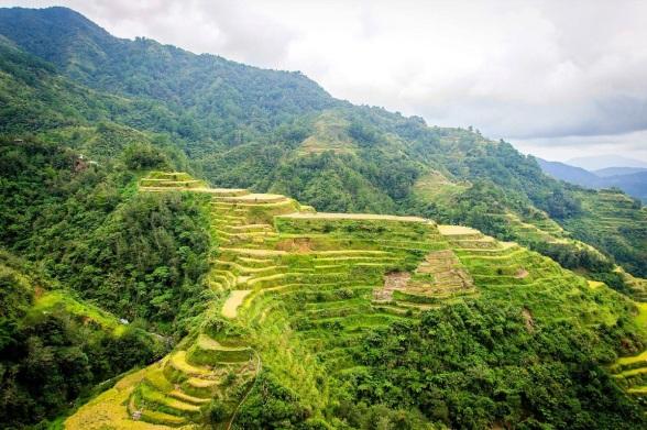 Rice_Terrace_Philippines
